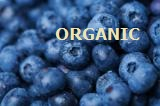 blueberries organic
